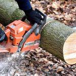 tree surgery costs