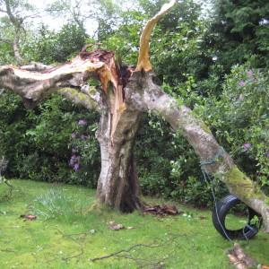 split tree damage