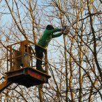 tree surgeon training
