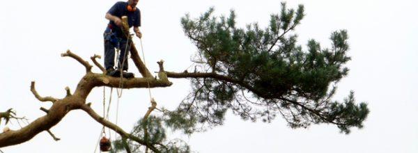 Do tree surgeons need to be insured?