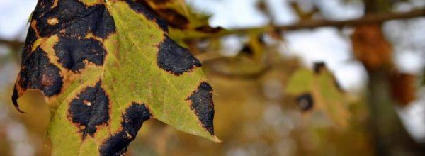 Reporting tree diseases & pests in the UK